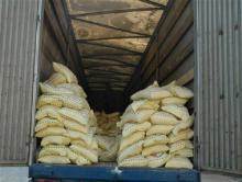 وقتی ممنوعیت واردات برنج منجر به ترویج برنج آلوده میشود/ لزوم حمایت توأمان دولت از مردم و شالیکارهای برنج